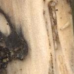 curiosidades termitas