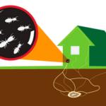 Protocolo eliminación termitas