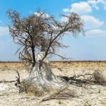 ¿Por qué las termitas ayudan a parar desiertos?