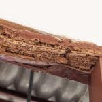Córdoba sufre una plaga de termitas con cerca de 50 casos