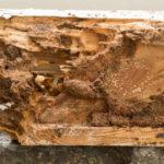Una plaga de carcoma derrumba el techo de una ermita en La Rioja