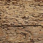 Insectos que comen madera como las termitas