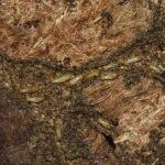 Mitos y leyendas sobre las plagas de termitas