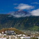 El coronavirus afecta a la plaga de termitas en Tenerife