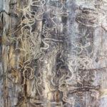¿Los seguros de hogar cubren la plaga de termitas?