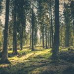 ¿Qué maderas prefieren o evitan las termitas?